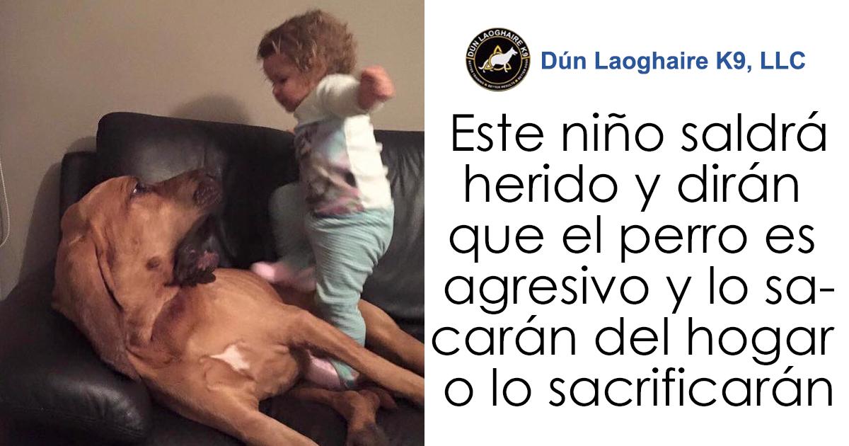 La gente está harta de que padres permitan a los niños maltratar a las mascotas, y explican lo estúpido y peligroso que es