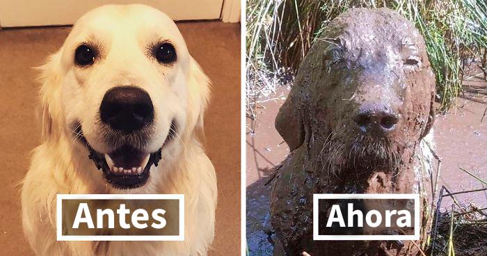 30 Razones por las que no deberías dejar a tus perros jugar en el barro (Nuevas imágenes)