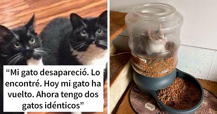 20 Divertidos snapchats de gatos que te arrancarán una sonrisa (Nuevas imágenes)