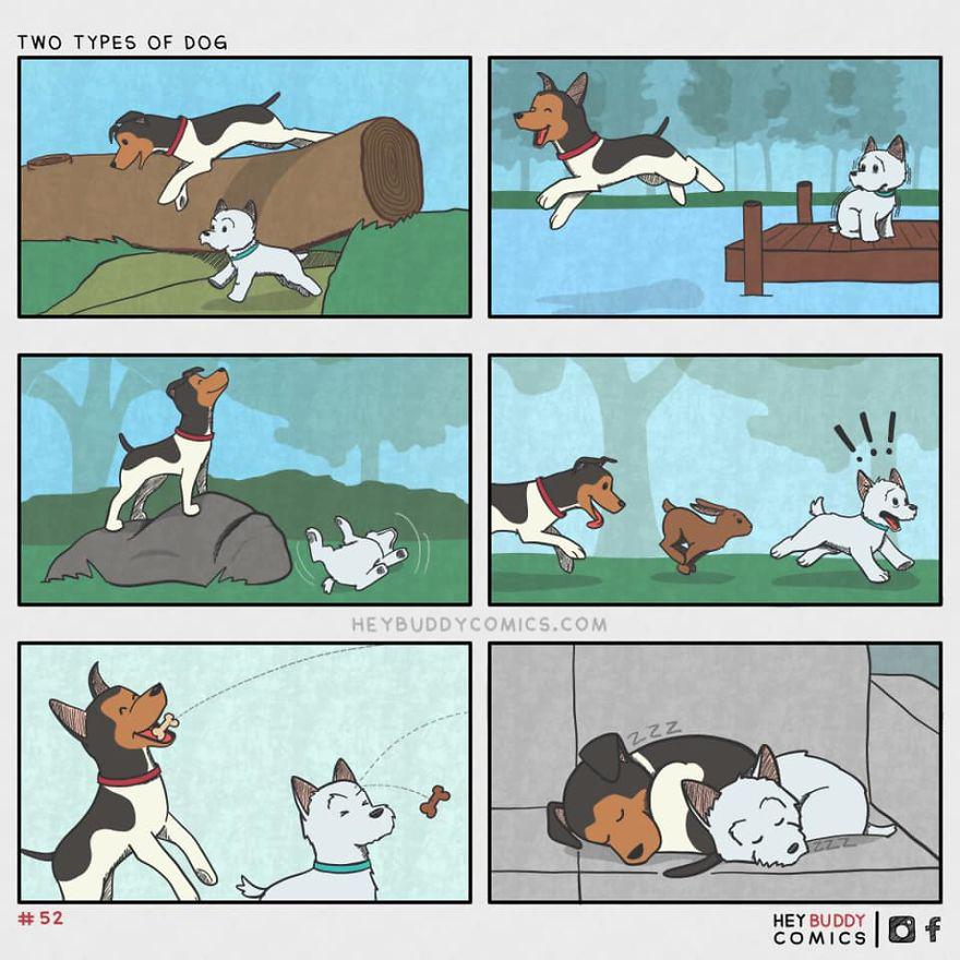 2 Tipos De Perro