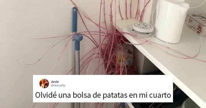 Esta estudiante volvió a su casa tras la cuarentena y descubre que las patatas están conquistando la casa, otras personas comparten fotos similares