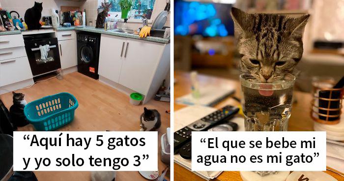 """""""Esta es mi casa, pero este no es mi gato"""": 40 fotos que te encantarán si te gustaría que apareciera un gato desconocido en tu casa"""