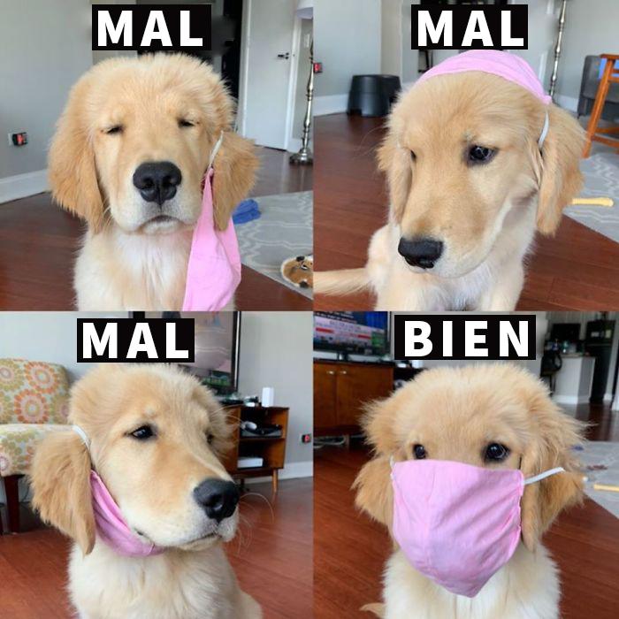 El Perro Te Lo Explica