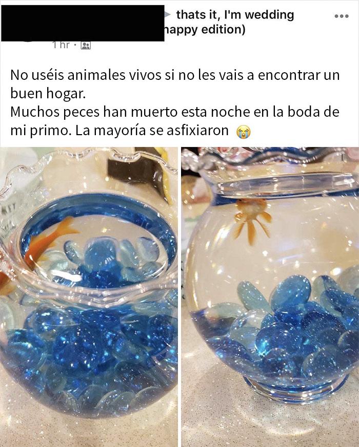 Los Animales Vivos No Son Decoración