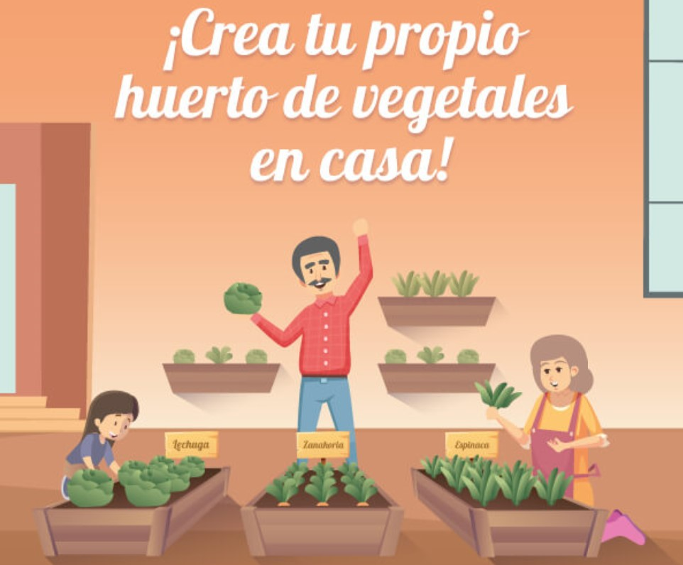 ¡crea Tu Propio Huerto De Vegetales En Casa!
