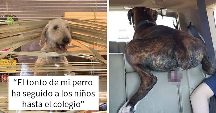 50 Divertidas mascotas que fueron avergonzadas en este grupo por portarse mal