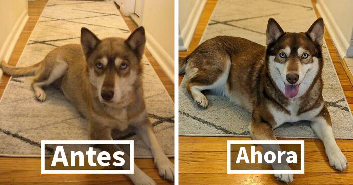 30 Fotos de perros antes y después de cambiar su vida al ser adoptados (Nuevas imágenes)