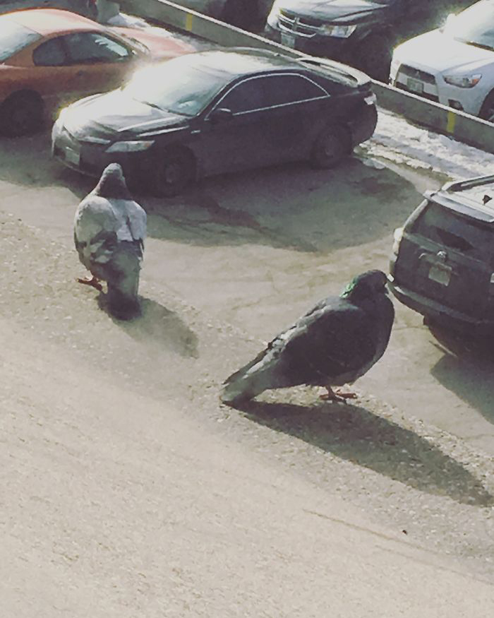Intento De Fotografiar Aves