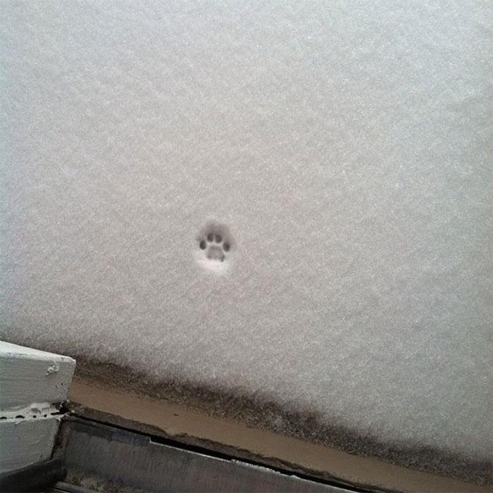 Intento De Salir A La Nieve