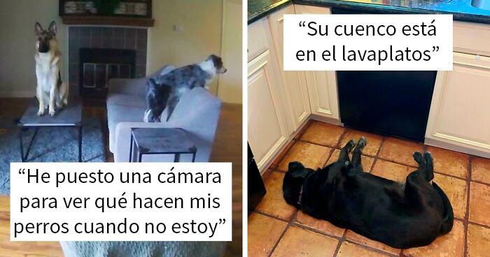 """""""¿Qué le pasa a tu perro?"""": La gente publica imágenes de perros """"malfuncionando"""" (45 fotos)"""