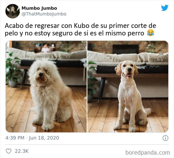 Ese es un perro diferente