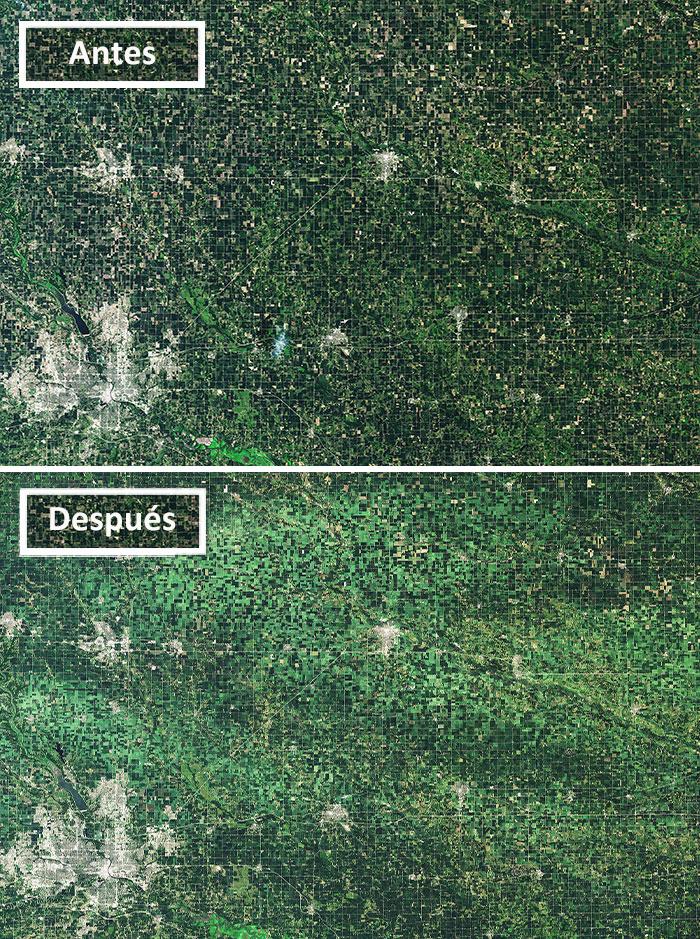 Derecho Flattens Iowa Crops