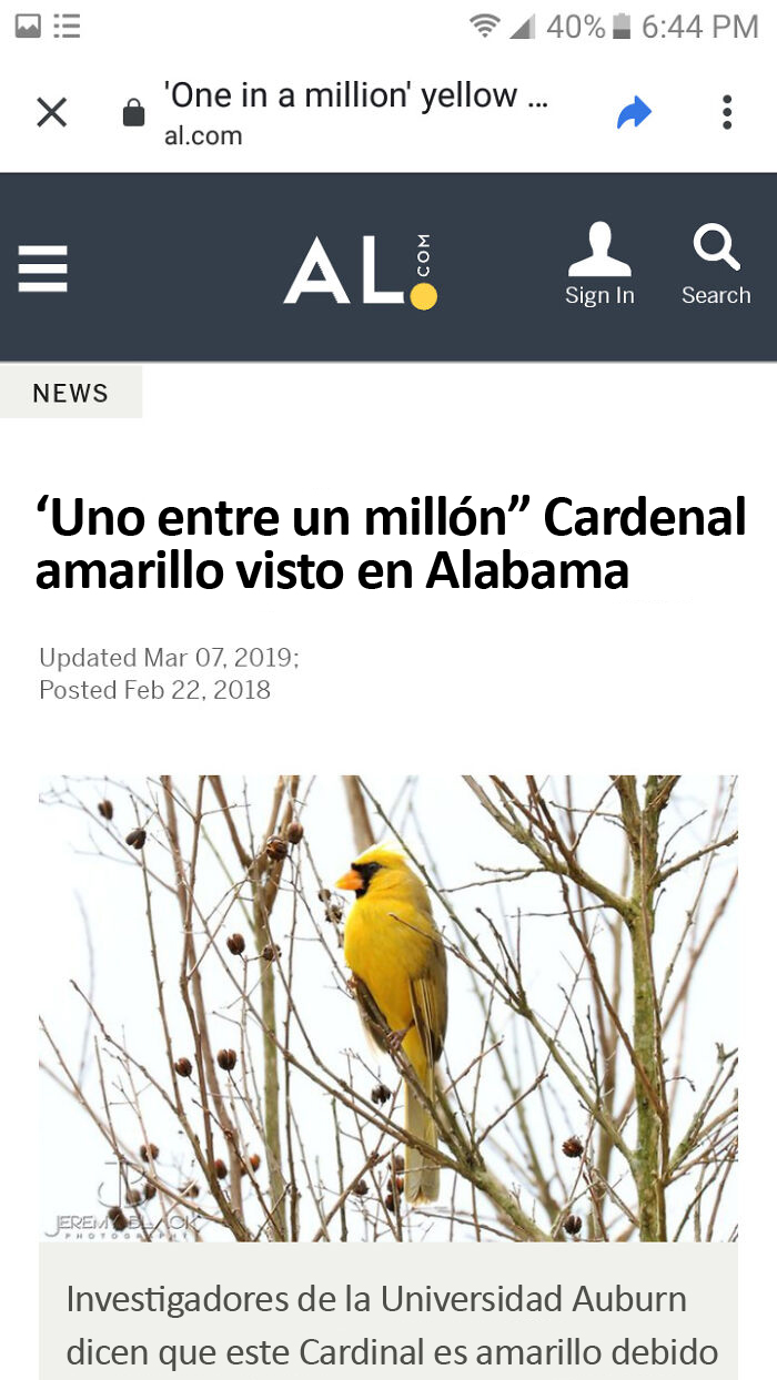 Cardenal brillante