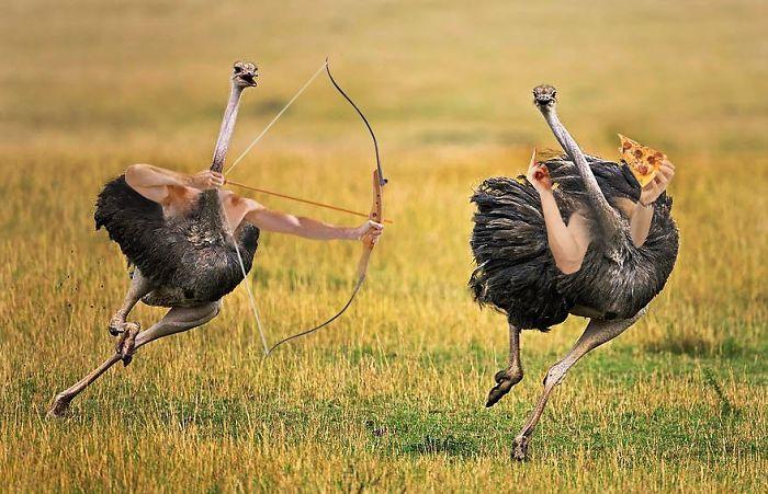 Pájaros con brazos: Internet pone brazos a los pájaros y es imposible no reír