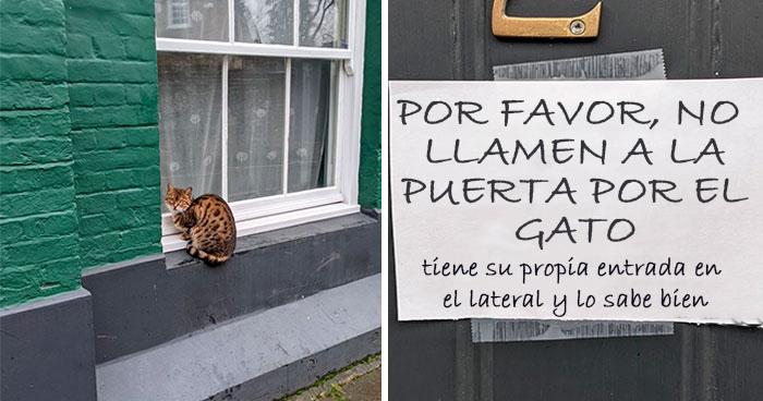 28 Gatos tan audaces que sus dueños tuvieron que poner carteles para avisar a los demás