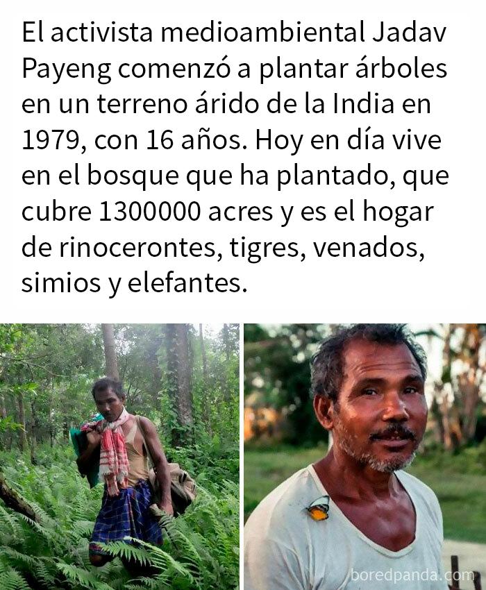 Plantó Un Bosque Entero