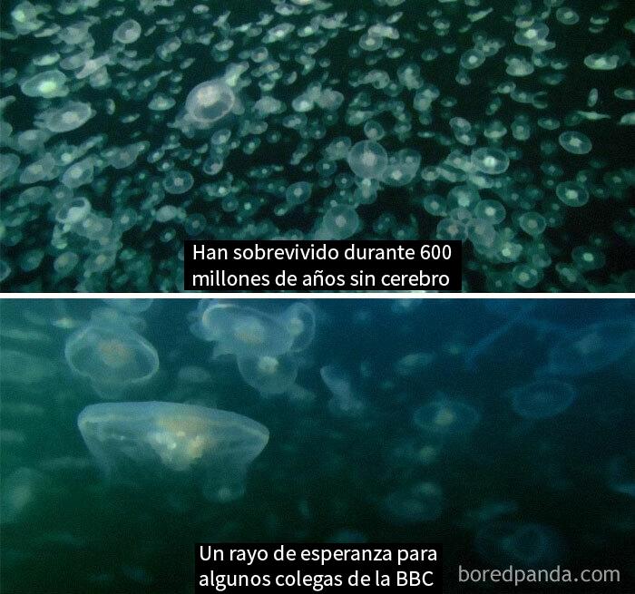 Documentales De La Naturaleza