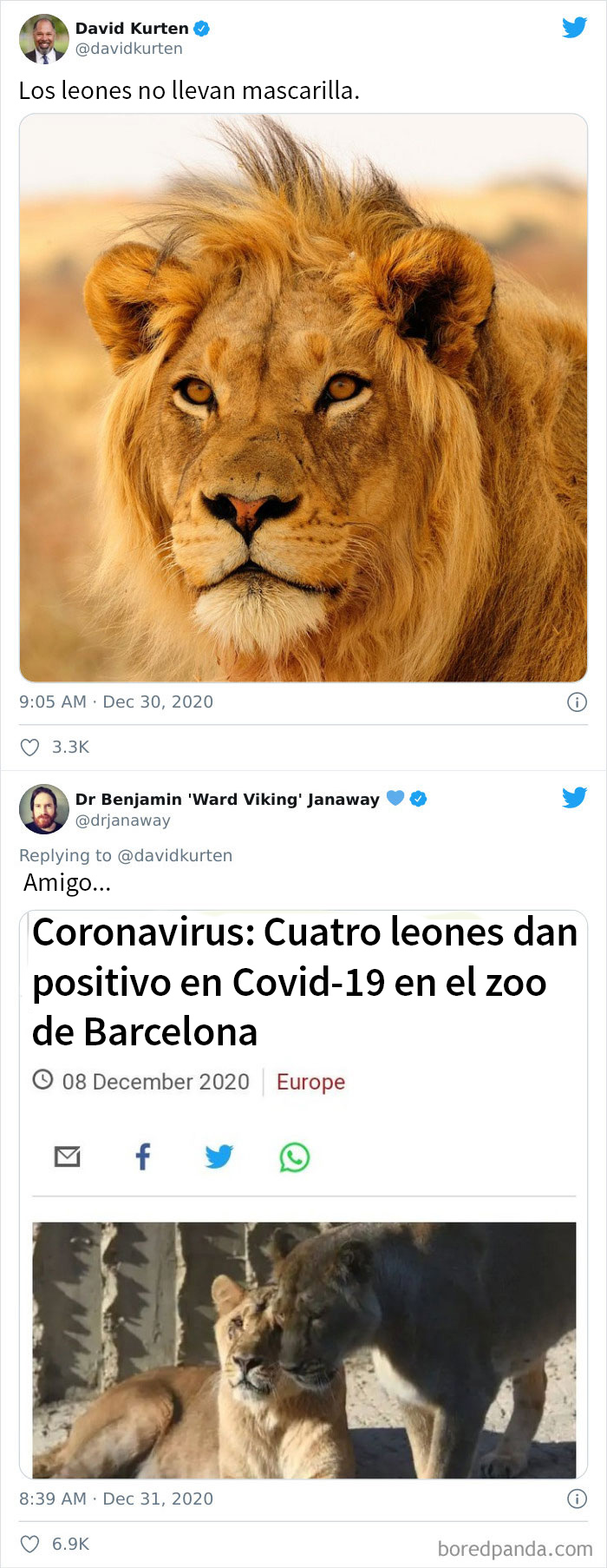 Pobres Leones