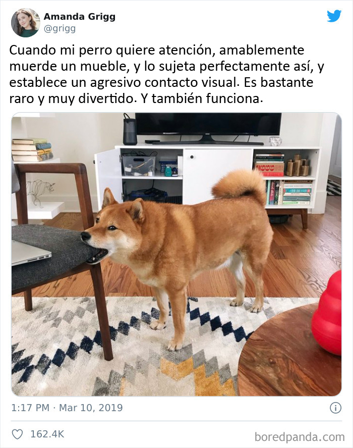 Un perro tan bonito