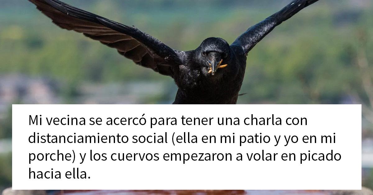 """Esta mujer comparte cómo creó un """"ejército de cuervos"""" alimentándolos, y posiblemente salvaron la vida de un vecino"""