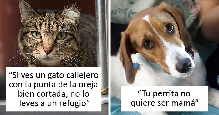 30 Veterinarios comparten información que todos los dueños de mascotas deberían saber