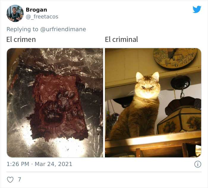 19 Crimes And Criminals Caught By Their Owners, As Shared In This Twitter Thread