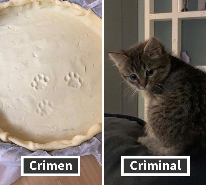 19 Crímenes y criminales pillados por sus dueños, compartidos en este hilo de Twitter