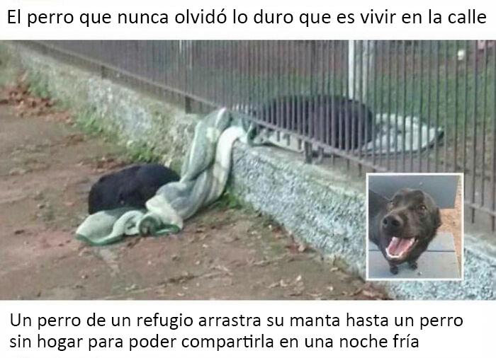 Un perro rescatado arrastra su manta hasta un perro sin hogar para que puedan compartirla en una noche fría