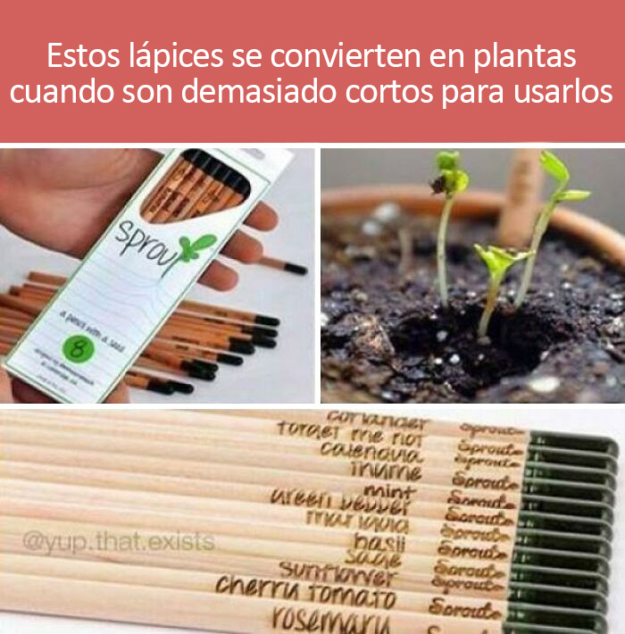 Lápices que se pueden plantar y convertir en especias de cocina cuando son demasiado pequeños para usarlos