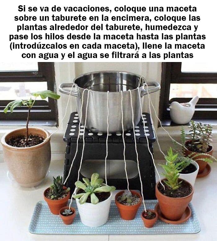 Regar las plantas durante las vacaciones