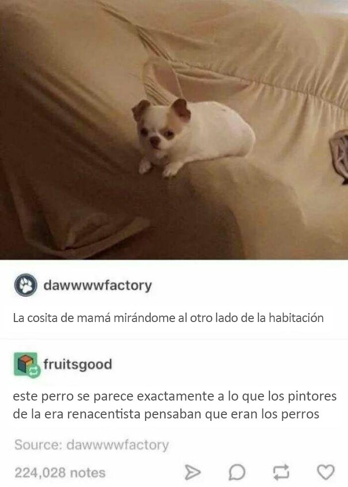 ¿Meterse con un perro vale?