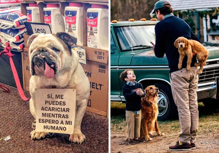 50 Reconfortantes publicaciones sobre perros para alegrarte el día (nuevas fotos)