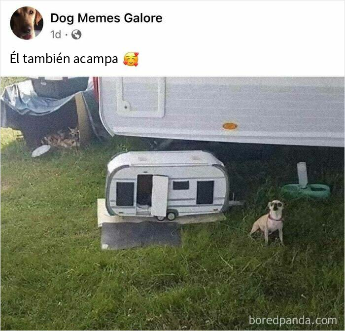 """50 Posts From The """"Heck This Is Super Wholesome"""" Group That Only Have Positive Vibes"""