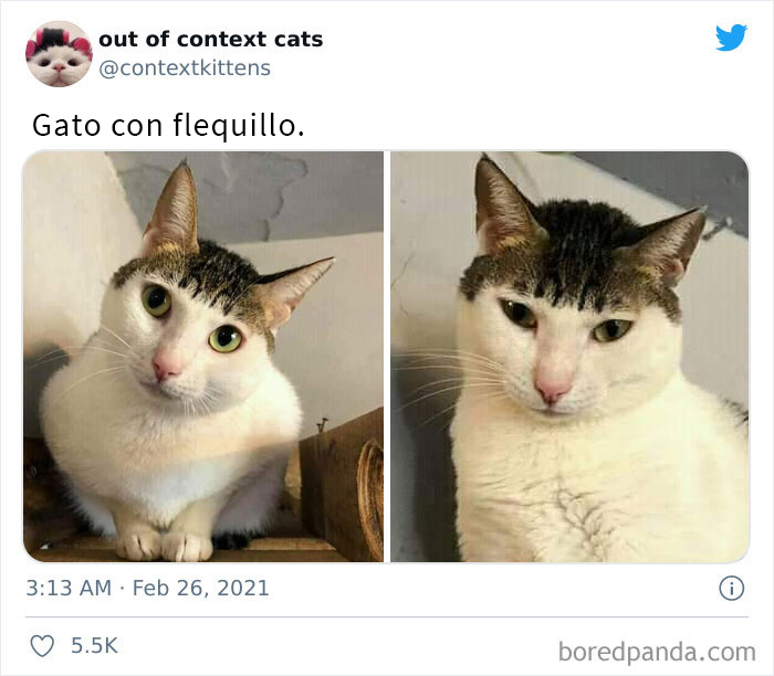 """The """"Out Of Context Cats"""" Twitter Page Shares Cat Pics That Give Off Confusing Energy (50 Pics)"""