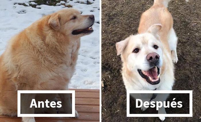25 Mascotas gorditas que perdieron peso y ahora se ven geniales