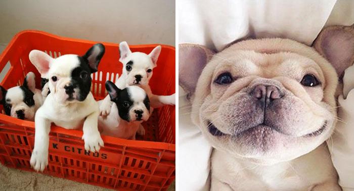 40 Simpáticos bulldogs que demuestran que los estereotipos sobre ellos son erróneos