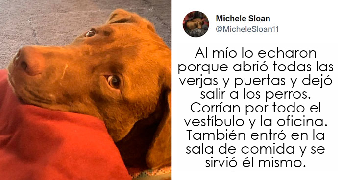 20 Perros que fueron expulsados de la guardería por divertidas razones, según cuentan sus dueños